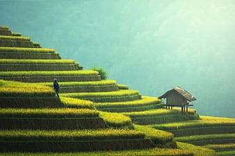 Agriculture landscape in rural China