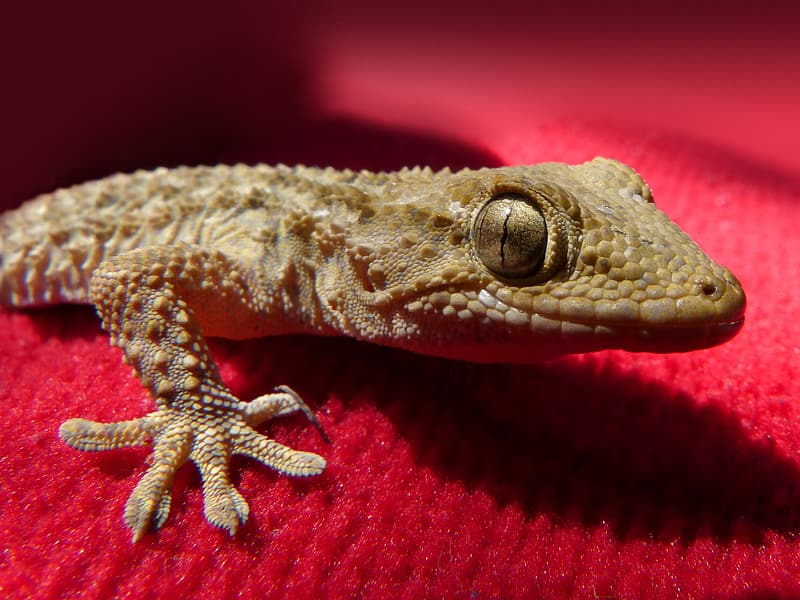 Brown and white lizard on brown wooden surface