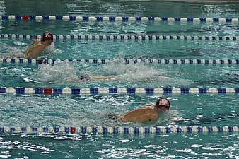 Several athletic swimmers in swimming pool
