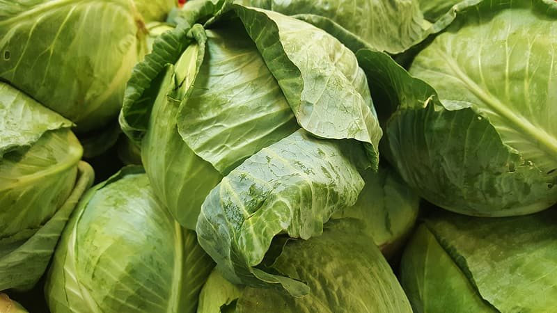 Close up photo of green cabbages