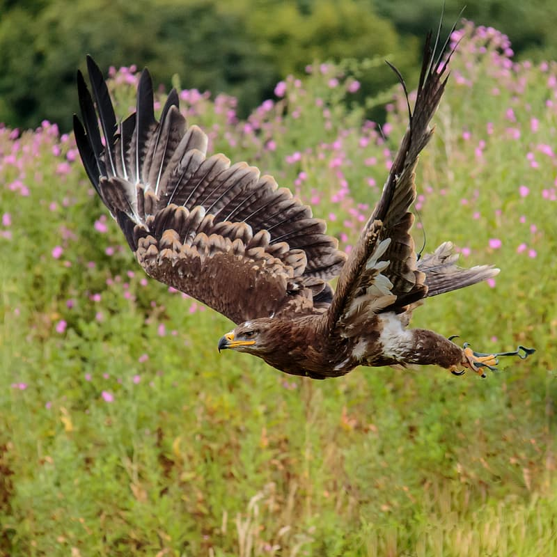 Photography of falcon