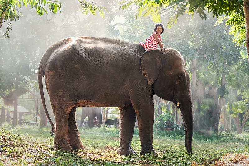 Toddler girl wearing red and white striped sleeveless dress rides on elephant