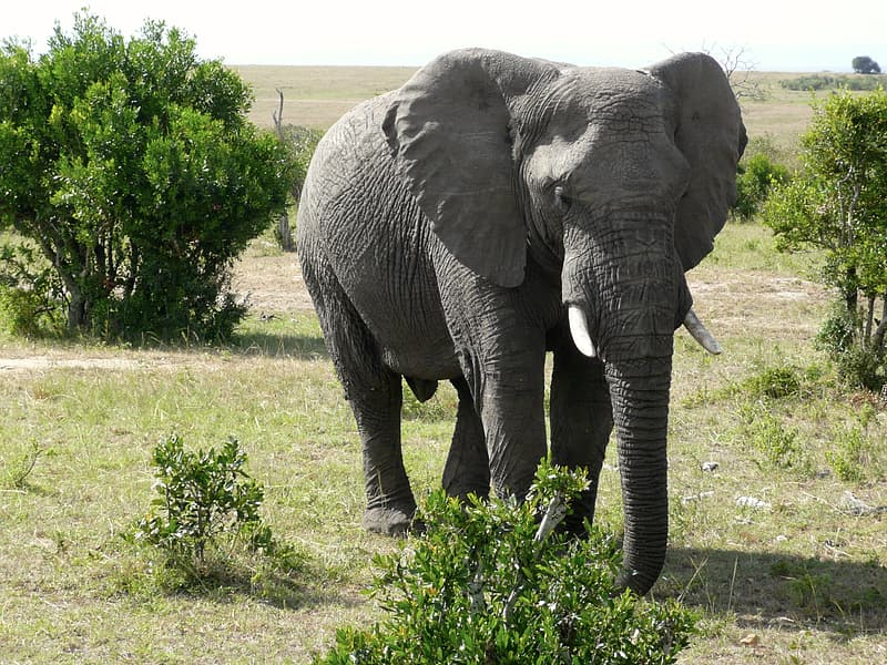 Gray elephant photography during daytime