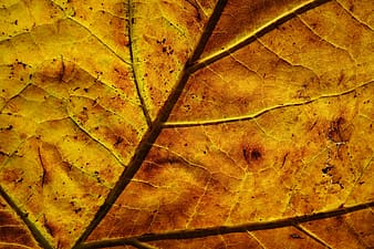 Brown dried leaf in close up photography