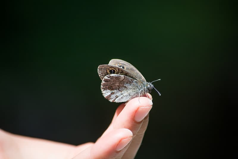 Gray butterfly on person's finger