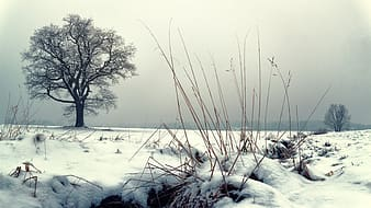 Photo of bare tree and snow field