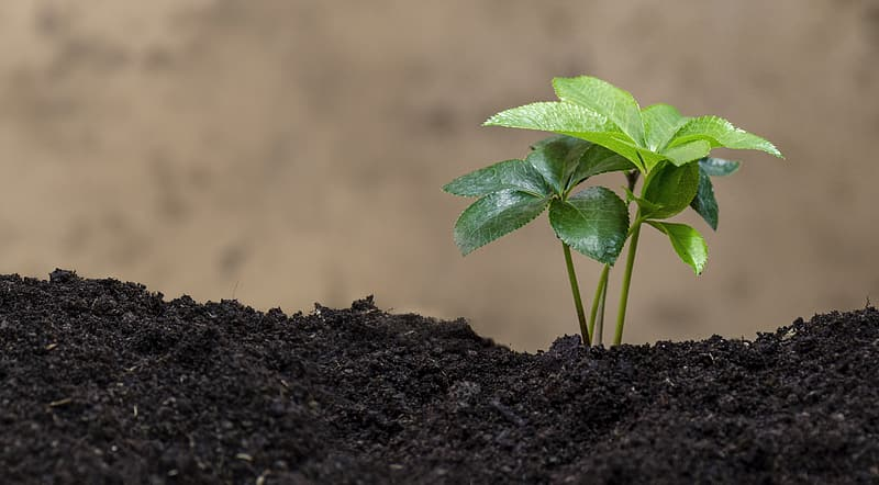 Selective focus photography of green leaf plant on soil
