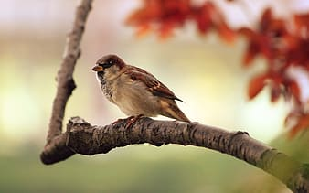Brown sparrow on brown tree branch close-up photo