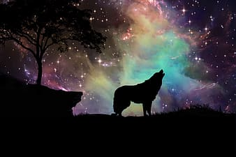 Silhouette of wolf during nighttime