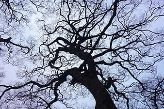 Low angle photography of withered tree