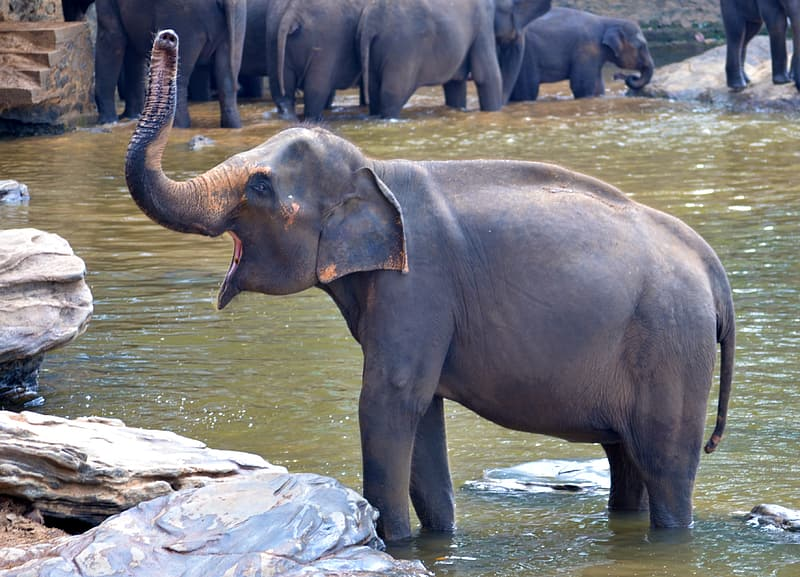 Elephant calf on water near its herd during day