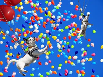 Two white-and-black dog floating with balloons under blue sky