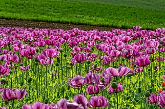 Purple petaled flower field taken during daytime