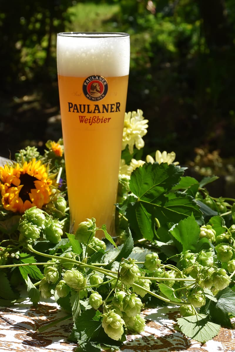 Clear Paulaner Wierbier glass with yellow liquid