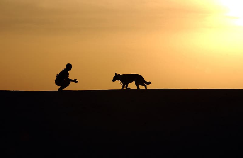Silhouette of man and adult German shepherd during sunset