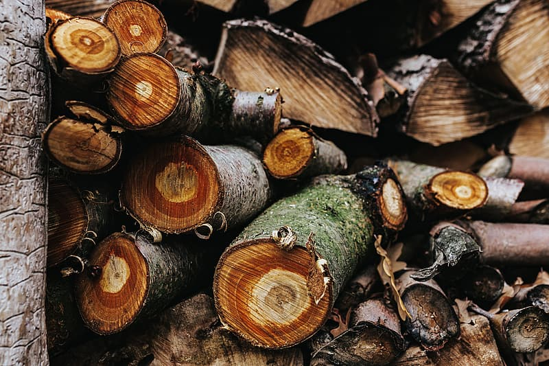 Brown and green wood logs