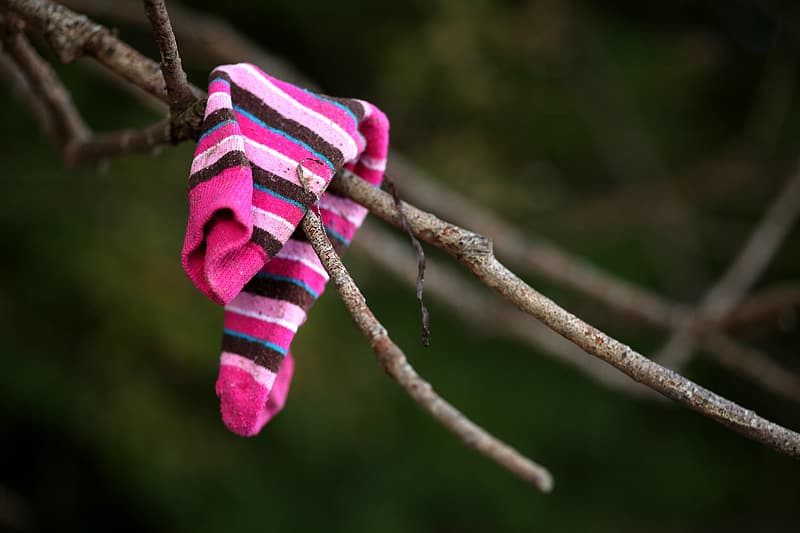 Pink and black stripe sock on tree branch