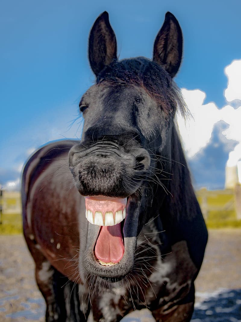 Close up photograph of brown horse