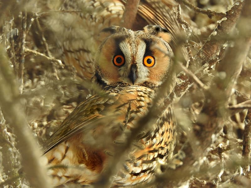 Selective focus photography of orange, white, and black owl on tree