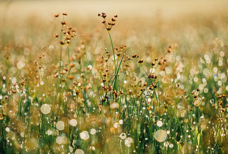 Yellow and brown flower field
