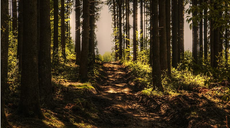 Scenery of forest