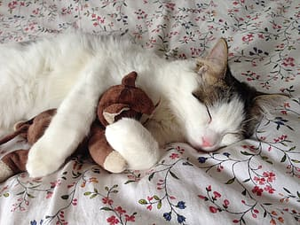 White and gray cat lying on white, blue, and red floral textile