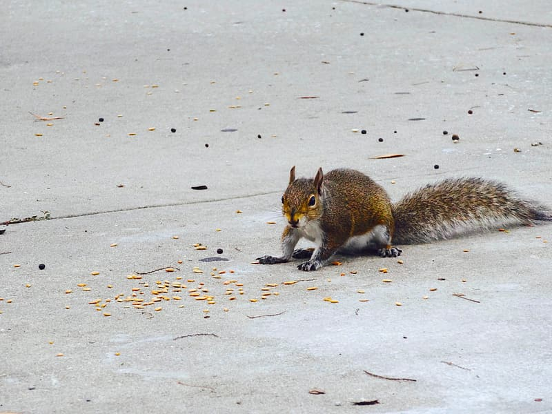 Brown squirrel on gray concrete floor during daytime