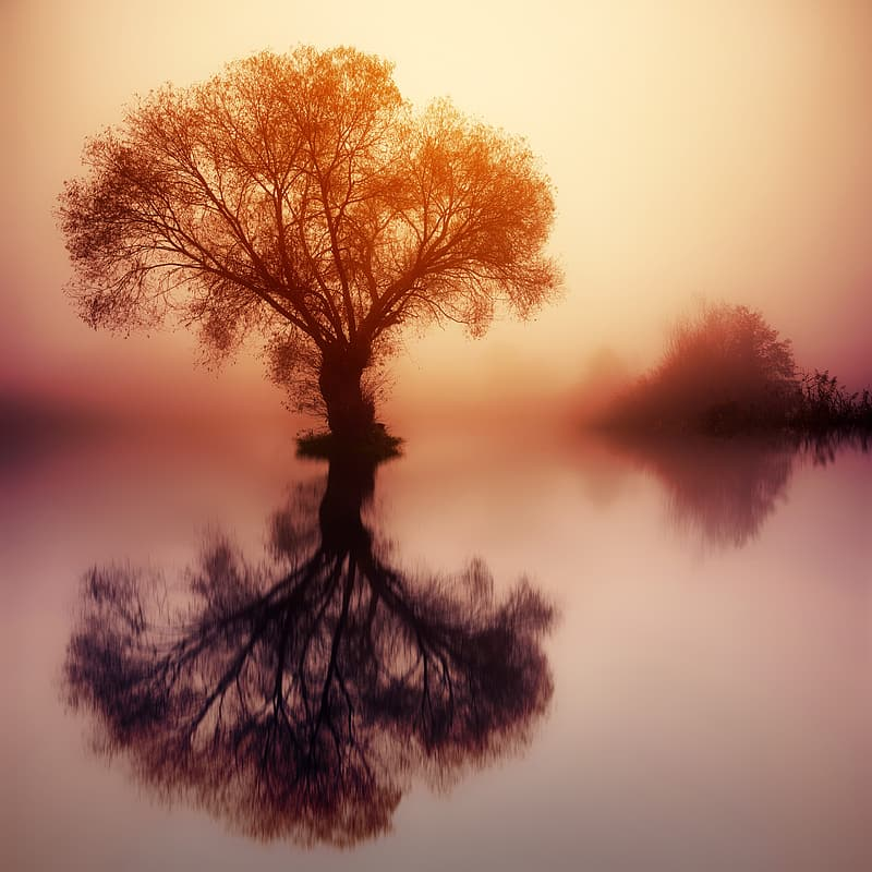 Tree on body of water during sunset