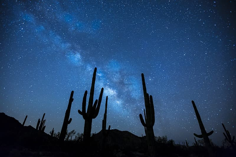 Silhouette of cactus photography