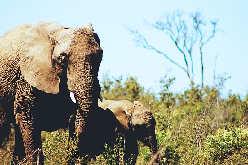 Two gray elephants near green leaf plant