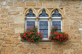 Front view of closed window with red flowers in pots