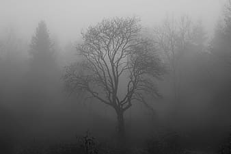 Fogged bare tree