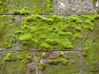 Wall coated by green grass