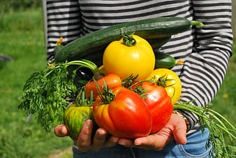 Person in white and black striped long sleeve top holding red and yellow bell pepper, celery and zucchini in both hands
