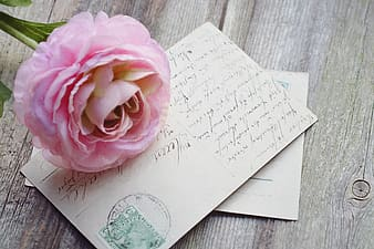 Pink flower with greeting card