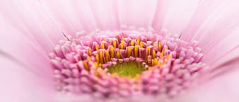 Close up photo of a pink petaled flower
