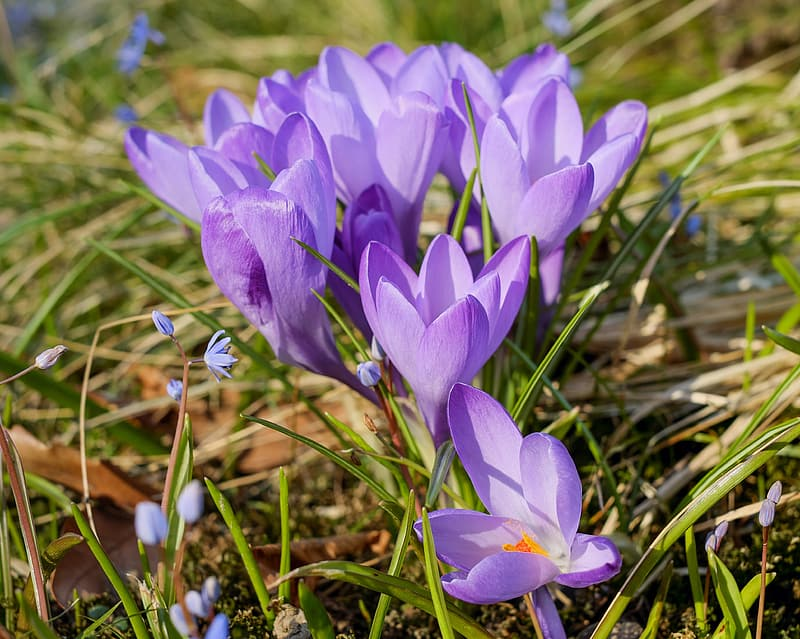 Close up photography of purple petaled flowers