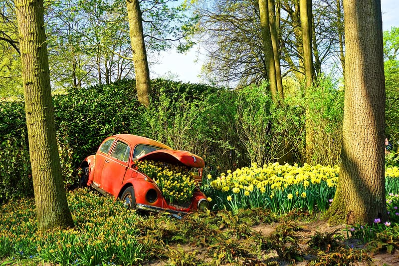 Parked orange Volkswagen Beetle coupe near on forest trees