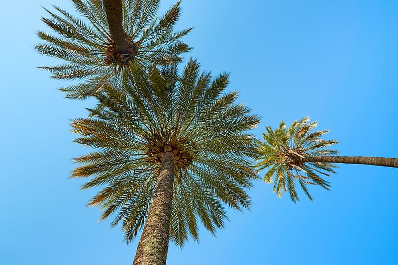 Low-angle photography of coconut trees under blue sky
