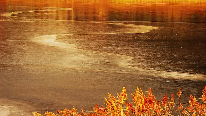 Red and yellow flowers on seashore during sunset