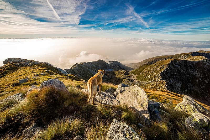 Short-coated tan and white dog standing near mountains at daytime