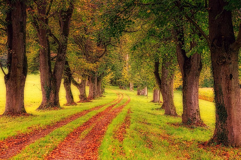 Green forest near road