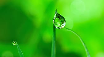 Selective focus photography of dew drop on plant