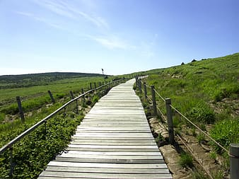 Wooden pathway between green pasture under calm blue sky