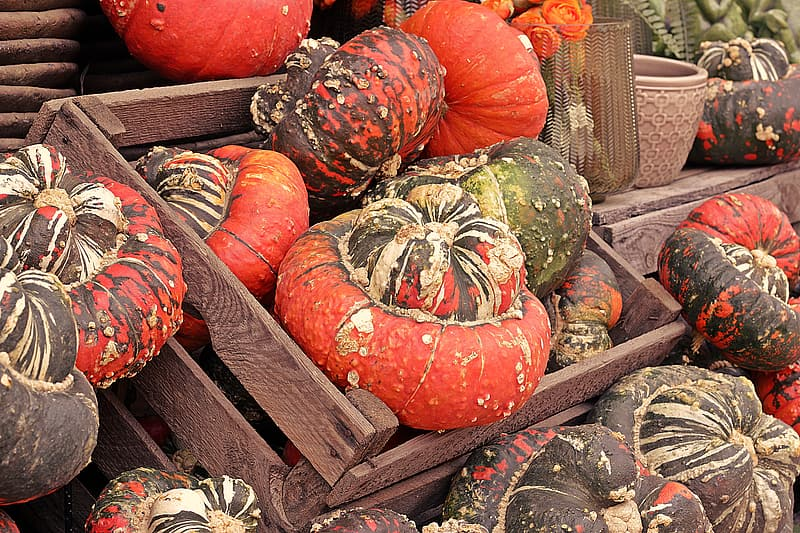 Orange and green pumpkins on brown wooden crate
