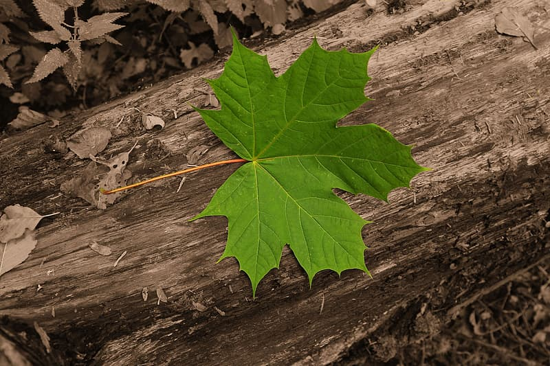Green leaf on brown wooden surface