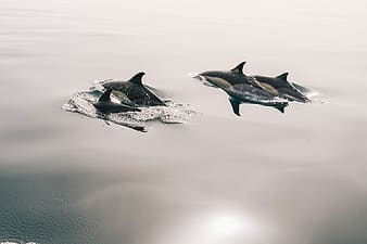 Killer whales in body of water
