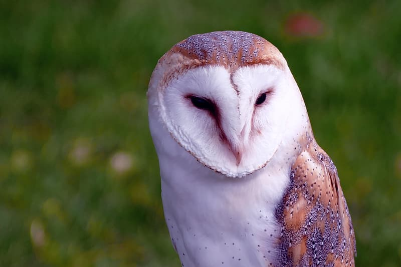 Macro photography of white and brown owl