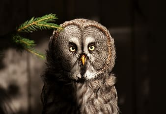 Photo of gray owl