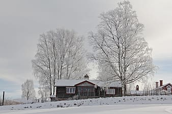 Trees near house covered by snows